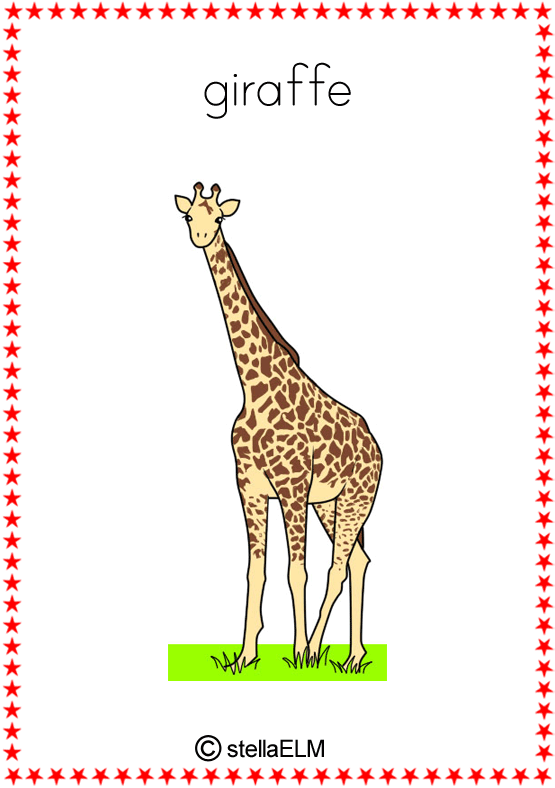 flashcards : animals