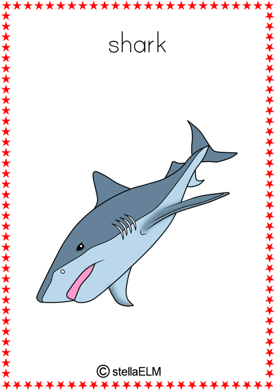 how to tell sharks apart