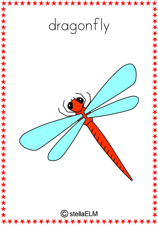 Flashcards Insects