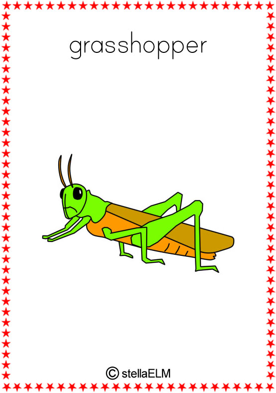 Beach Christmas Cards >> flashcards : insects