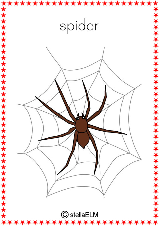 flashcards insects : spider from stellaelm.net size 555 x 788 jpeg 77kB